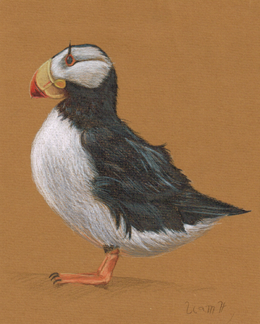 Puffin by studiodenny