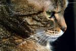 Cat's World II by Lastofthewilds666