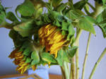 Sunflowers Stock 2