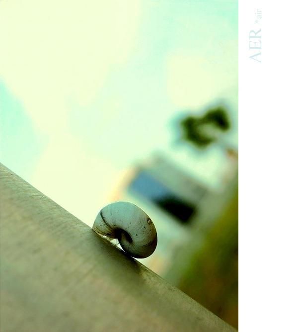 urban snail by hepikied