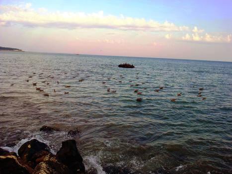 Seagulls at Sea