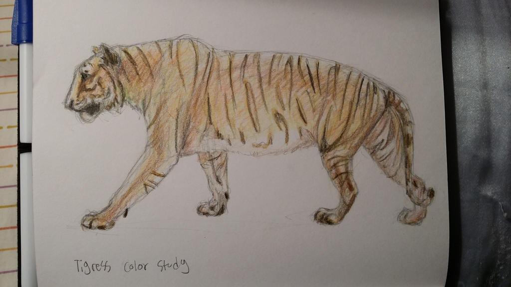 tigress color study by Denece-the-sylcoe