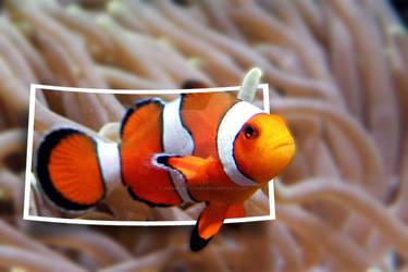 Pesce pagliaccio acquario