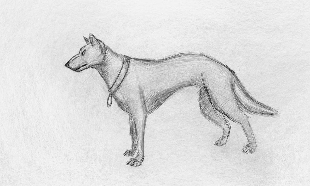 Dog by xurux