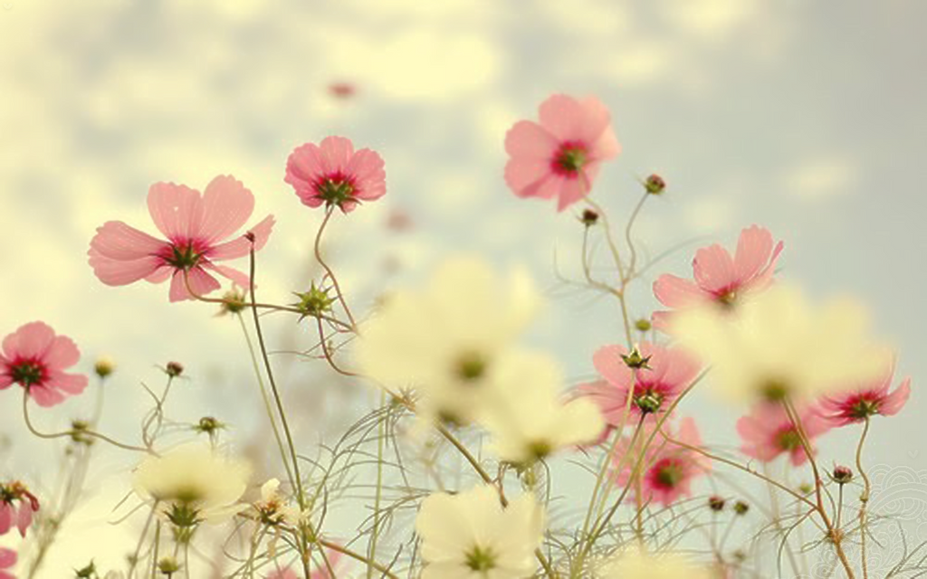 wall flower pink by Analaurasam