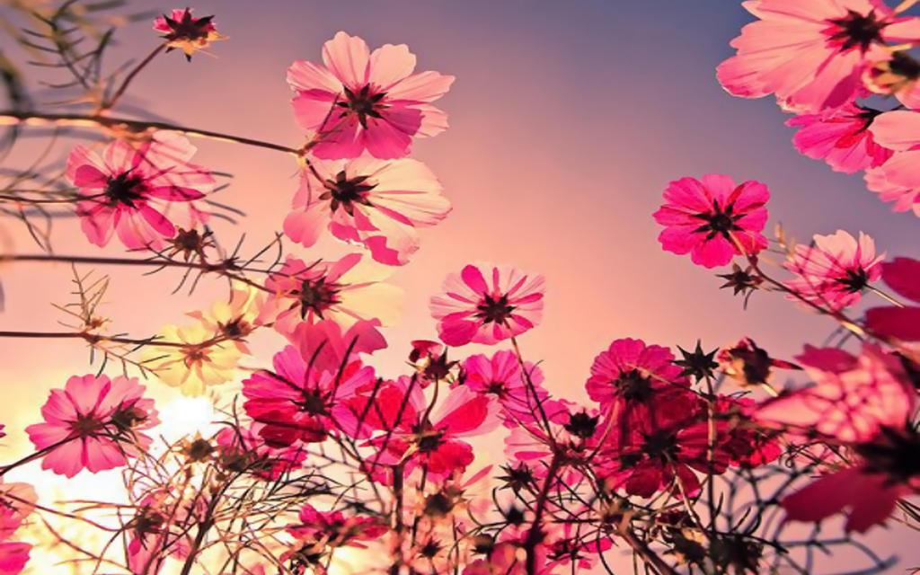 Hipster Flower Desktop Wallpaper | www.pixshark.com ...