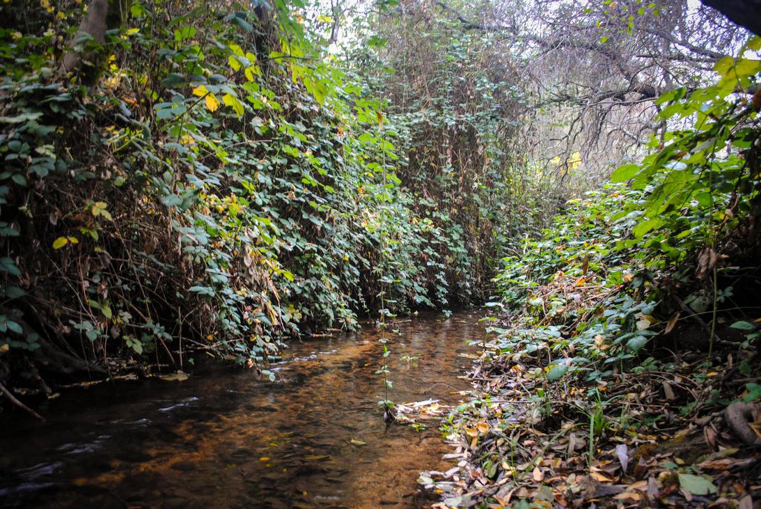 Hidden Creek by ShamrockGreen