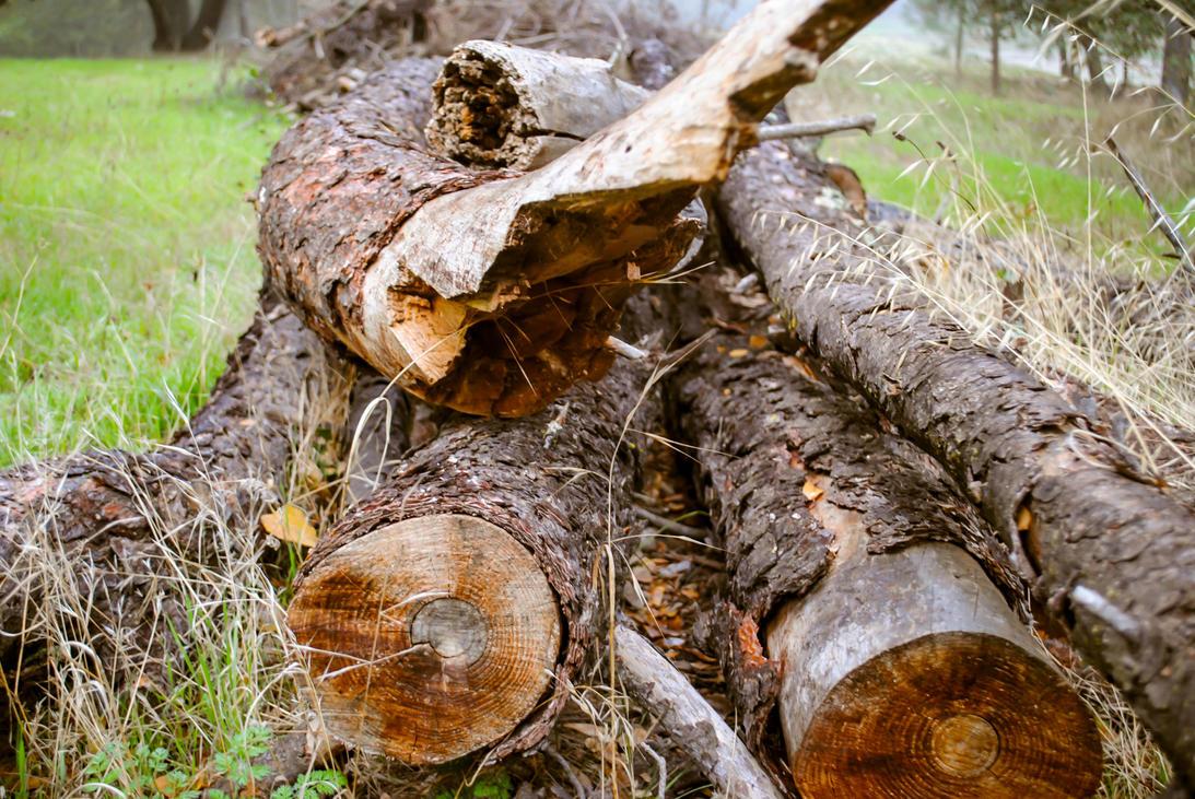 The Old Log Pile by ShamrockGreen