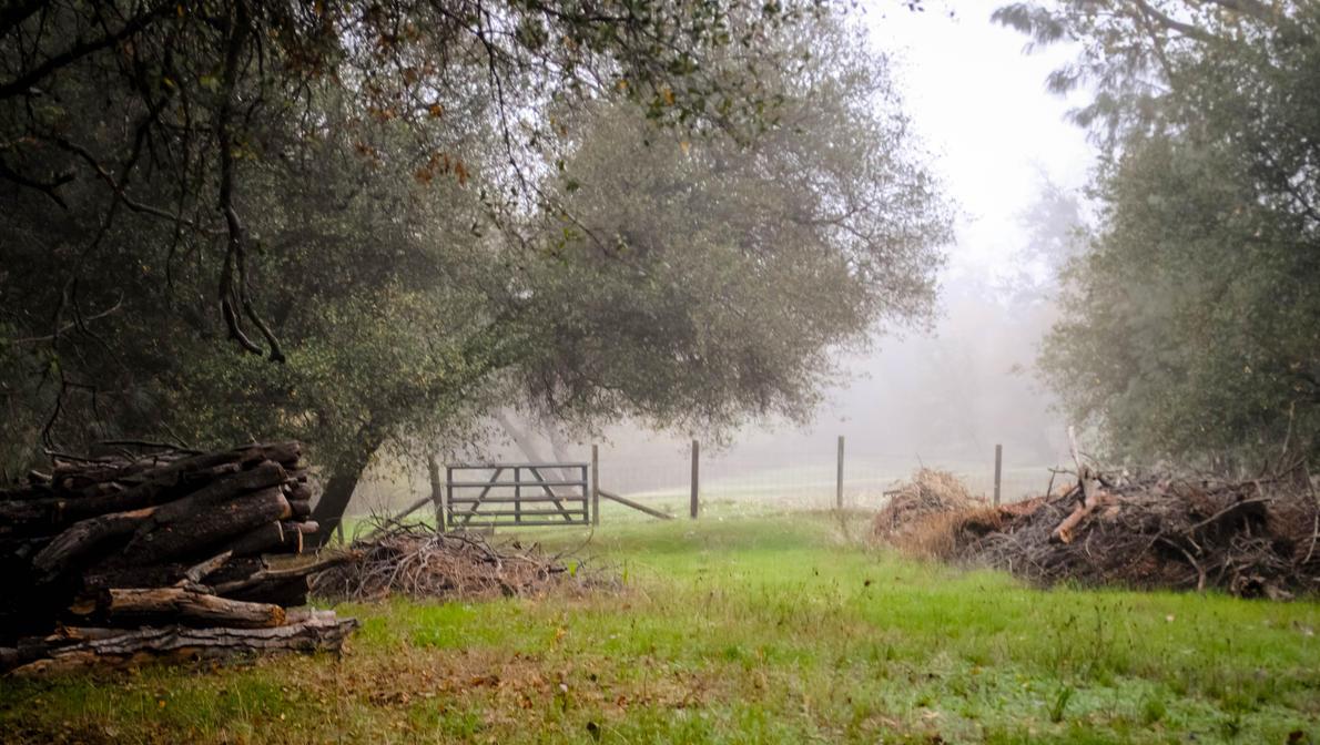 Country Morning Fog by ShamrockGreen
