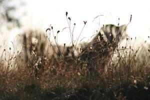 Hidden by SaNNaS