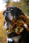 October Zodd
