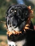 Autumn Zodd