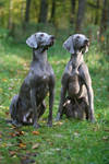 Silver dogs by SaNNaS