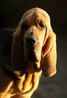 Shadow hound by SaNNaS