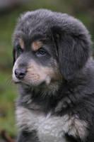 Mr. Blue pup by SaNNaS