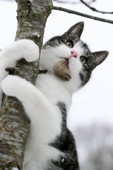Tree hugger Kitty