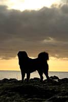 Majestic morningview by SaNNaS