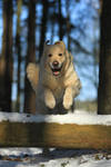 Jollytime jump jump