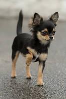 MEGA attitude TINY pup by SaNNaS