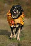 Running into fall