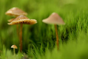The magic world of mushrooms
