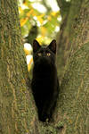 'Kittycat in a tree...'