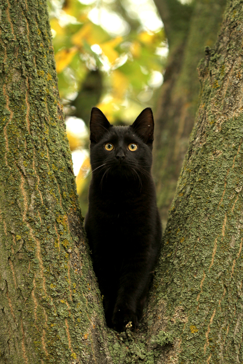 'Kittycat in a tree...' by SaNNaS