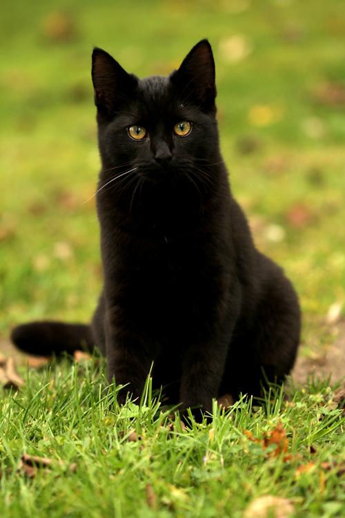Black kittyqueen by SaNNaS