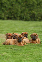 Curious pile of puppies by SaNNaS