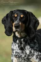 Swiss hound by SaNNaS