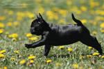Black shadow puppy stretch