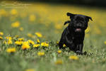 Love and dandelions