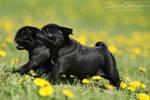 Puppy speed ON by SaNNaS