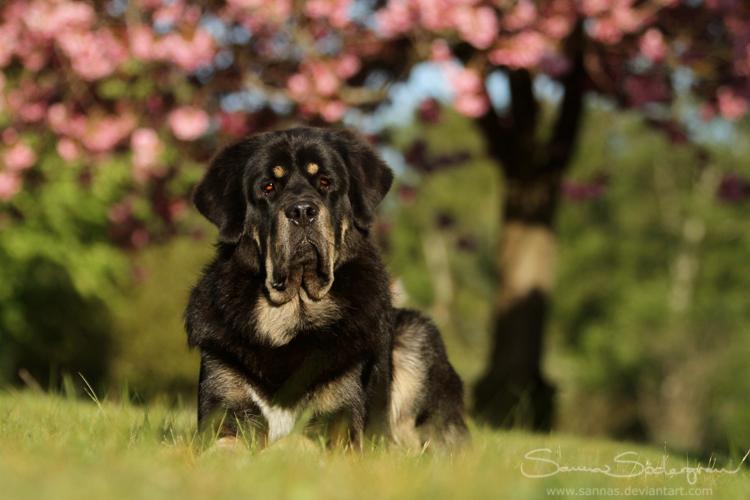 Zodd under the cherry tree