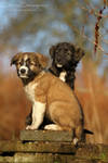 Stella and Sol, the tiny watchdogs
