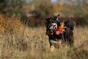 Autumn smile by SaNNaS