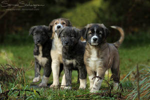 Four mini guardians by SaNNaS