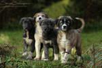 Four mini guardians