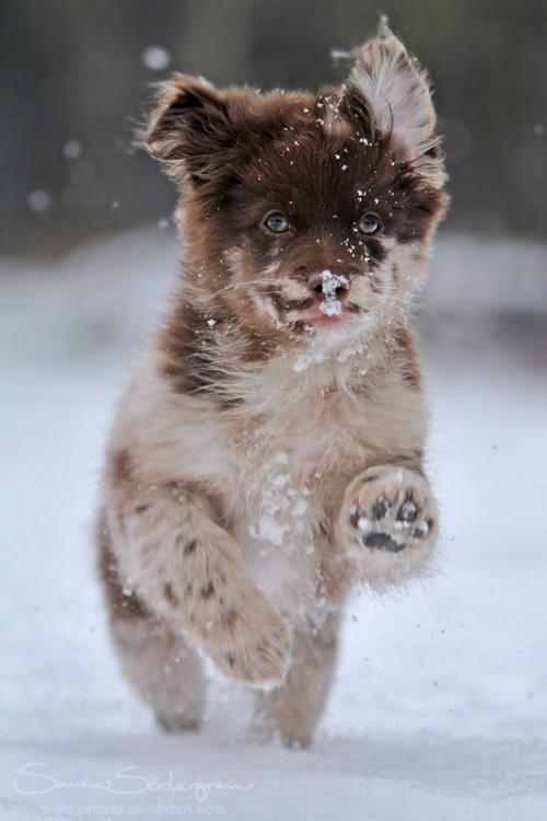 Chibi loves snow by SaNNaS