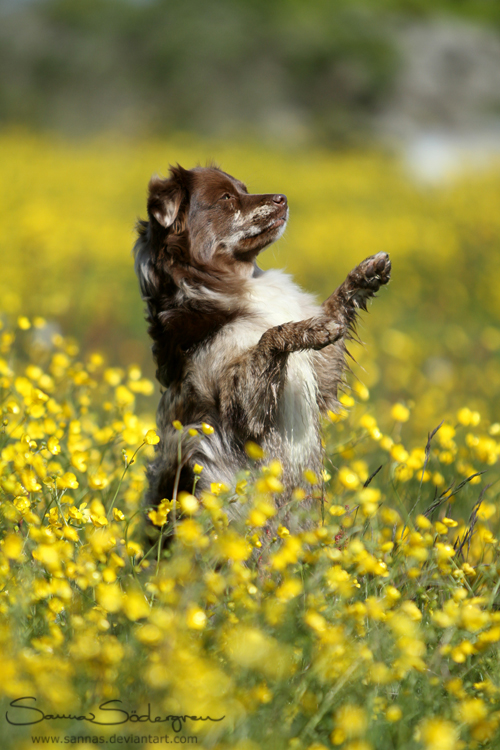 Flowerking Chibi by SaNNaS