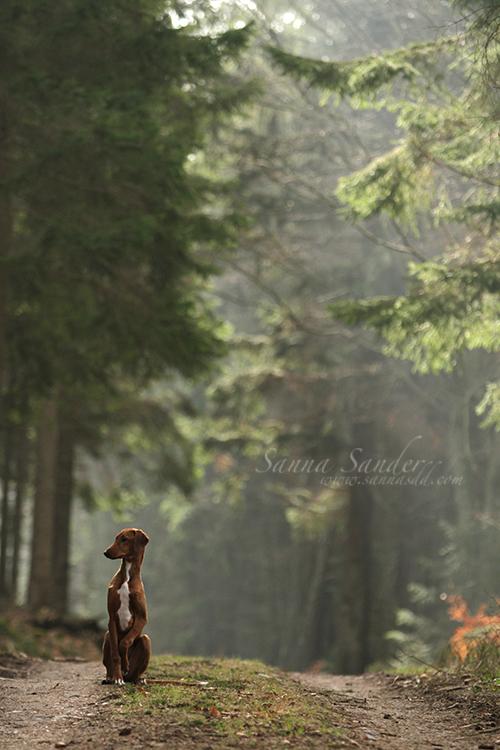Fairytale by SaNNaS