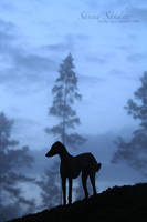 Blue dusk by SaNNaS