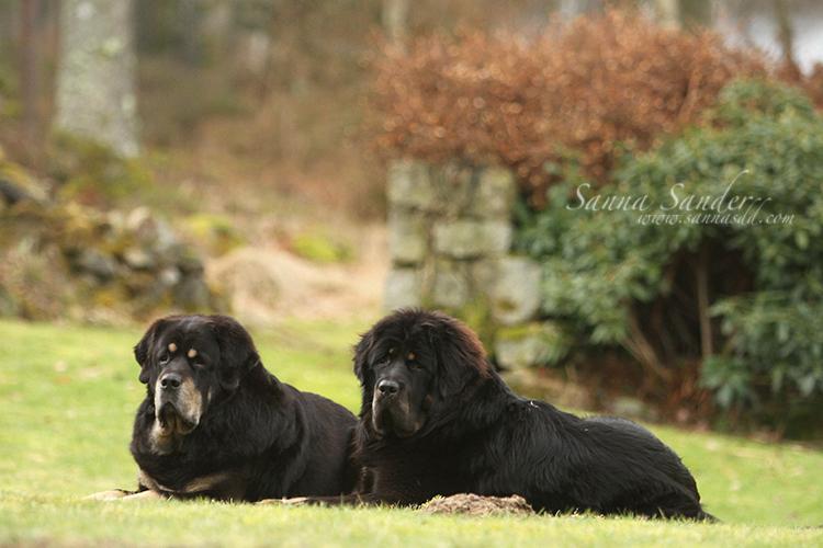 Zodd and Temudjin by SaNNaS