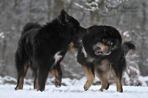 Beasty boys
