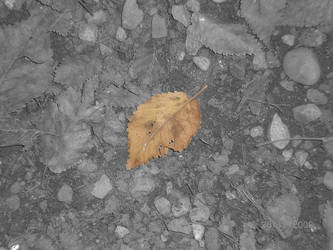 Fall by valvik