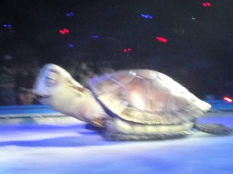 Disney on ice 16 Cardiff 2017