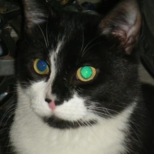 Strabismee's Profile Picture