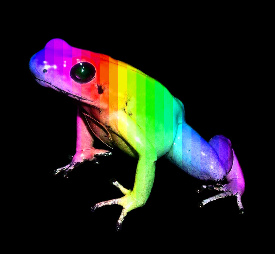 rainbow frog by sweets8