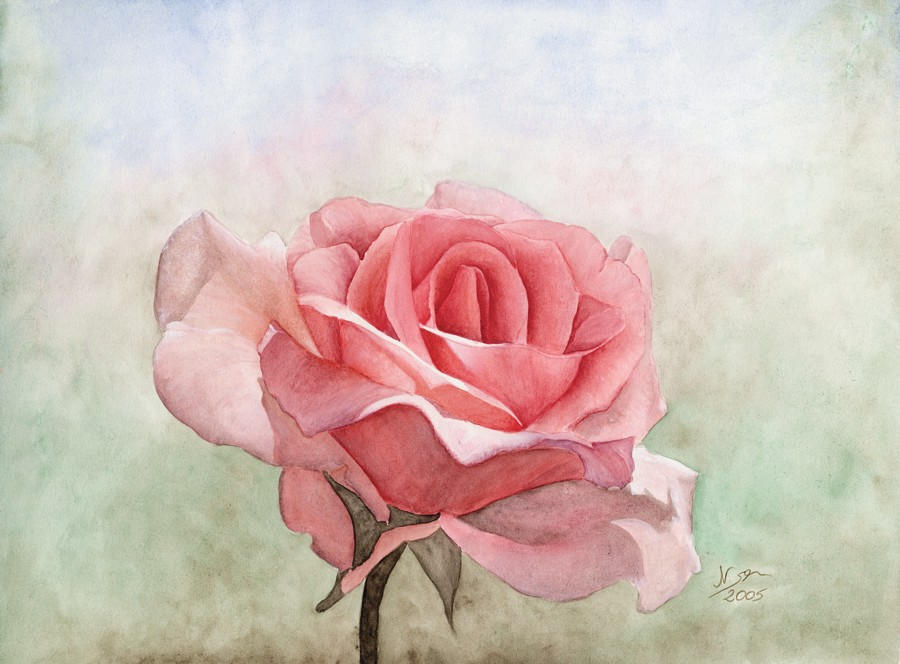 Rose by Chicinikki