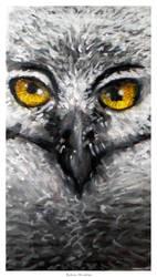 Owls sight by FacundoDiaz
